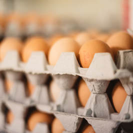 ​We are not only producers and farmers of delicious & wholesome Free Range Eggs we are also marketers and distributors of our own product